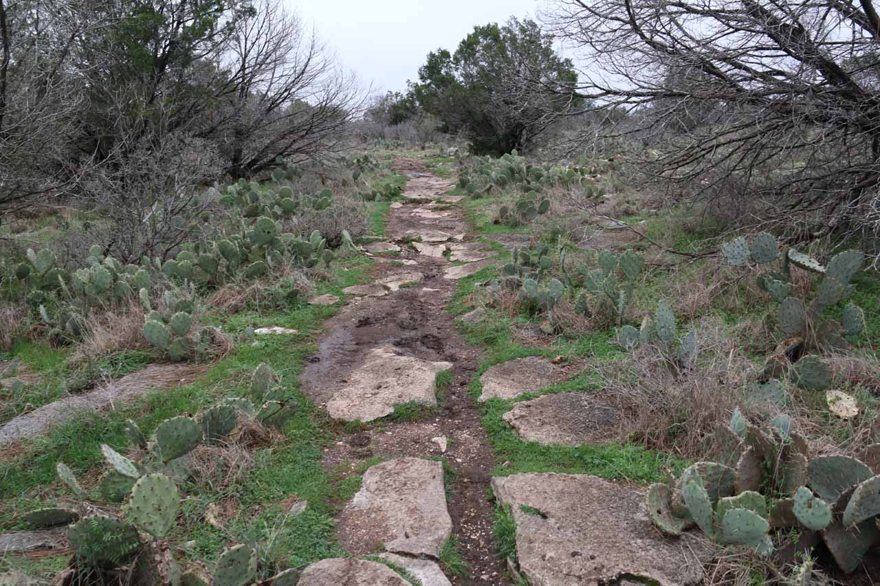 A large part of the trail was flanked by low-lying cacti, which indicated just how hot and dry the area can be