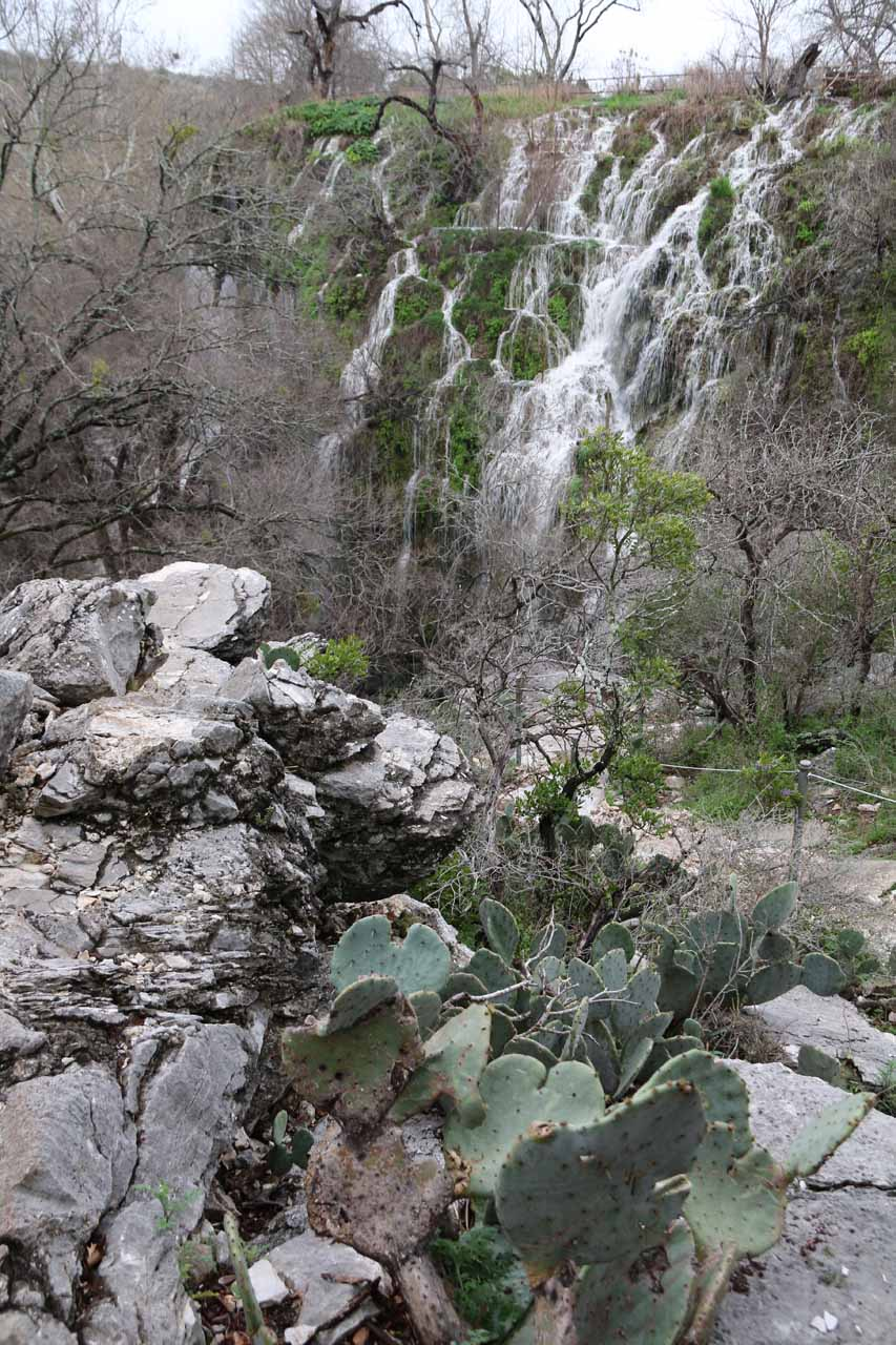 My first look at the impressive Gorman Falls fronted by a cactus just before making the final descent along the cables