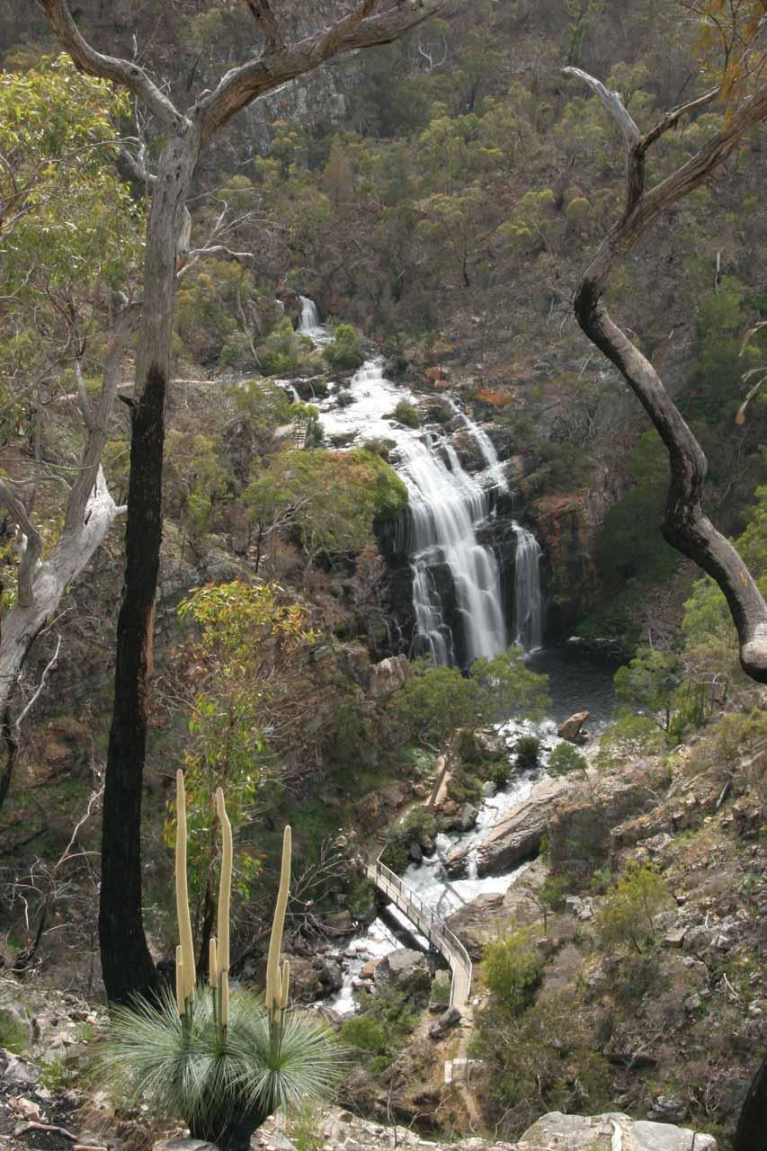 Kangaroo Tails fronting MacKenzie Falls