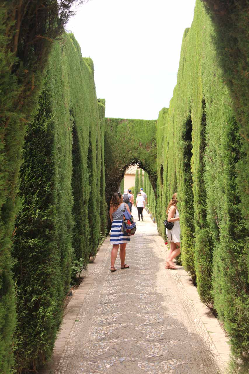 Walking through carefully trimmed hedge-flanked walkways to the Generalife