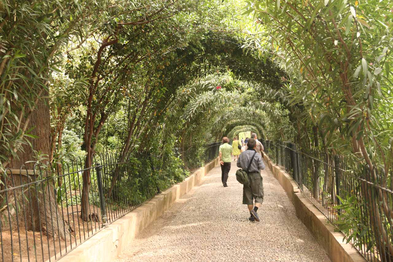 Making the long walk from Generalife to Alhambra beneath arch-like tree canopies like this one