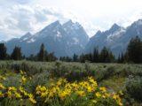 Grand_Tetons_008_jx_06252004 - Wildflowers before the Tetons
