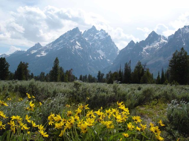 Grand_Tetons_008_jx_06252004 - While waterfall hunting, we spotted wildflowers blooming before the Teton Range
