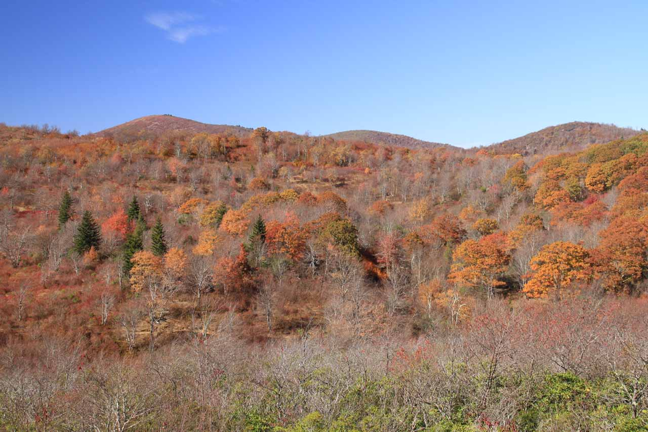 The eerie denuded trees mixed in with others exhibiting Autumn colors of the Graveyard Fields