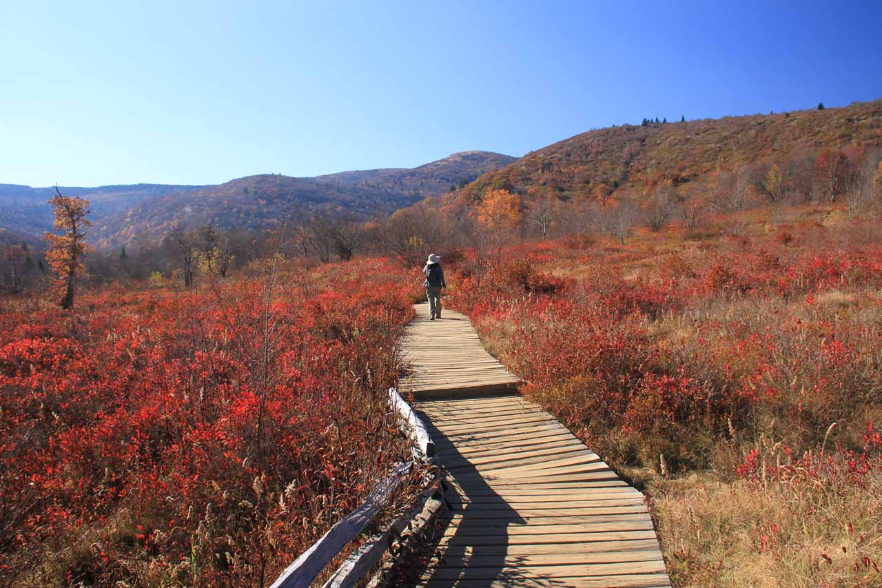 On a boardwalk amidst the Graveyard Fields, which was surrounded by beautiful scenery