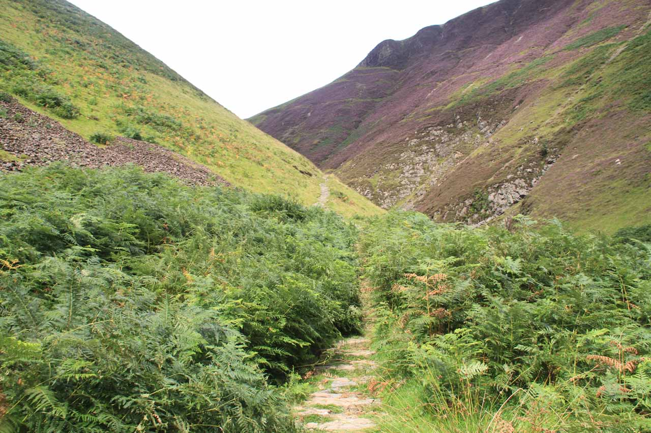 This part of the trail amongst the low bush was a potential spot of confusion given the false trails and overgrowth, but we knew which direction to go given how quickly the trail would climb above the valley, which we'd see from down here