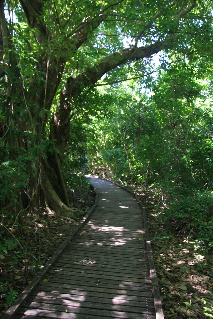 The Green Island rainforest