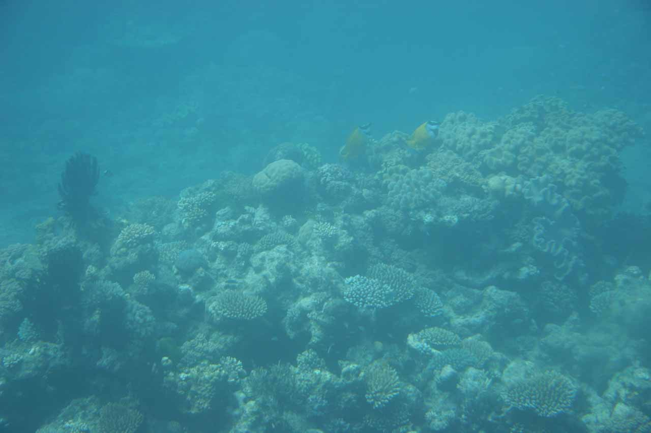 Underneath the surface of the water at the Great Barrier Reef