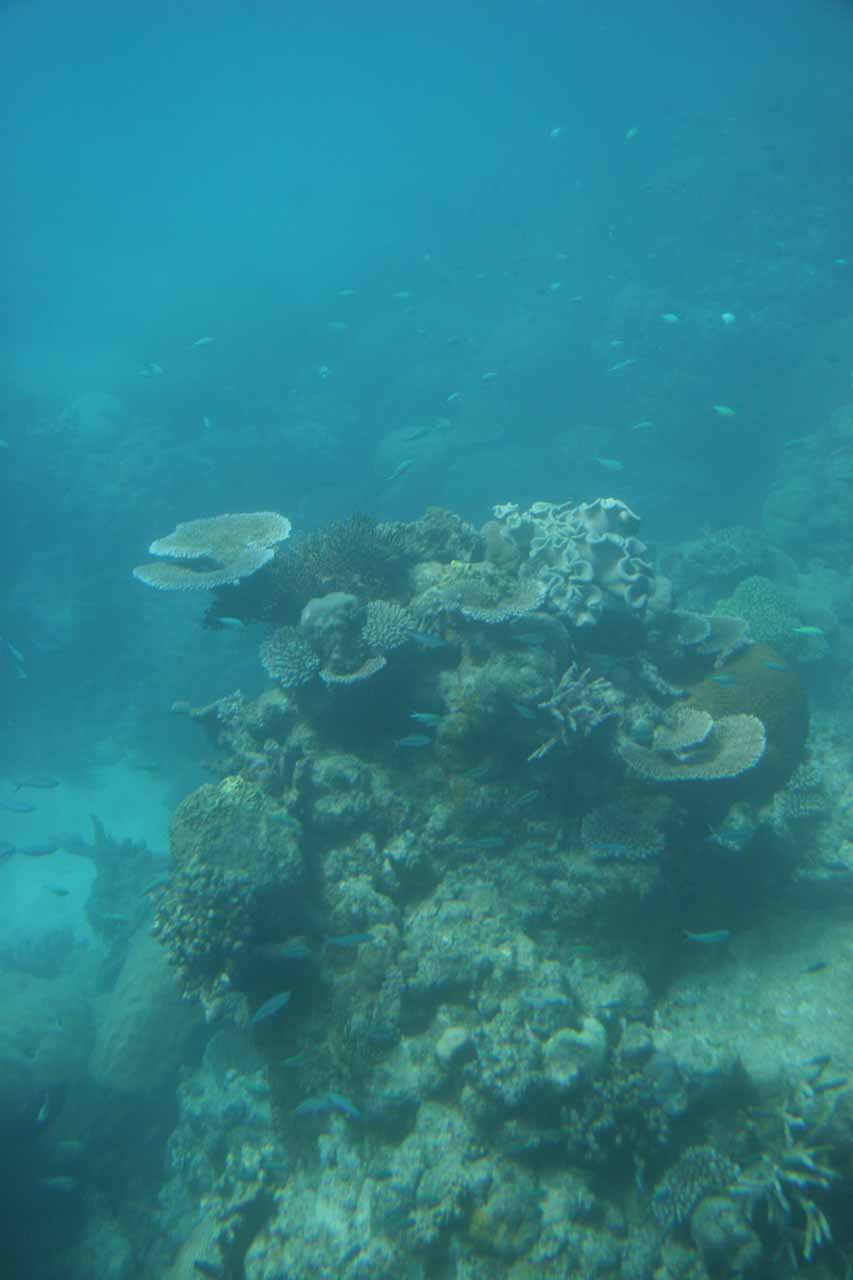 More reefs seen from the semi-sub