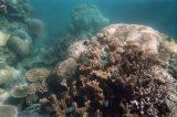 Great_Barrier_Reef_uw_012_01242014