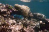 Great_Barrier_Reef_uw_015_01242014