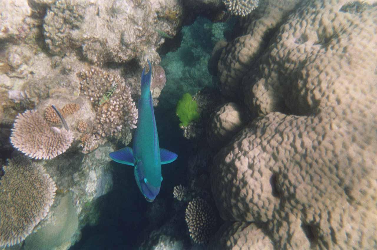 The Great Barrier Reef snorkel