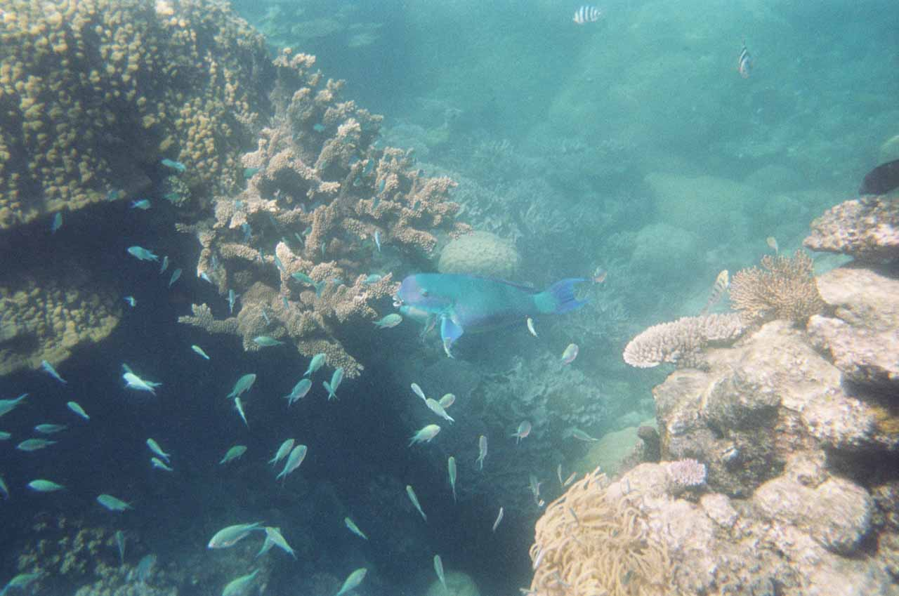 The Great Barrier Reef snorkel