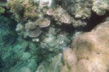 Great_Barrier_Reef_uw_034_07052008