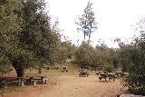 Green_Valley_Falls_119_02102019 - Another extensive picnic area though this one was not in the Falls Scenic Area of Green Valley Campground