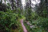 Grizzly_Bear_Falls_037_07302020 - Beyond the footbridges, the Blackberry Trail was looking more and more like it was entering a legitimate wilderness