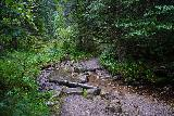 Grizzly_Bear_Falls_045_07302020 - Once I was in the Black Elk Wilderness Area, there were no bridges so I already had to make this unbridged crossing of some side creek as I pursued Grizzly Bear Creek