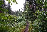 Grizzly_Bear_Falls_047_07302020 - Heading south on the Centennial Trail as it went through a lot of lush scenery as I was approaching Grizzly Bear Creek