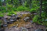 Grizzly_Bear_Falls_055_07302020 - Finally making it down to a crossing of Grizzly Bear Creek, which was around 1.1-1.2 miles from the Blackberry Trailhead, but in order to pursue Grizzly Bear Falls going upstream, I learned quickly that it was pretty much an off-trail bushwhack and/or stream scramble