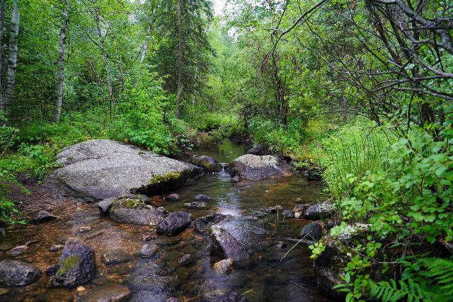 Grizzly_Bear_Falls_058_07302020 - Looking upstream at Grizzly Bear Creek, where pursuing the Grizzly Bear Falls in this direction was pretty much either a stream scramble or a rough bushwhack
