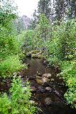 Grizzly_Bear_Falls_061_07302020 - Looking upstream along the Grizzly Bear Creek somewhere within the rough bushwhack and stream scramble