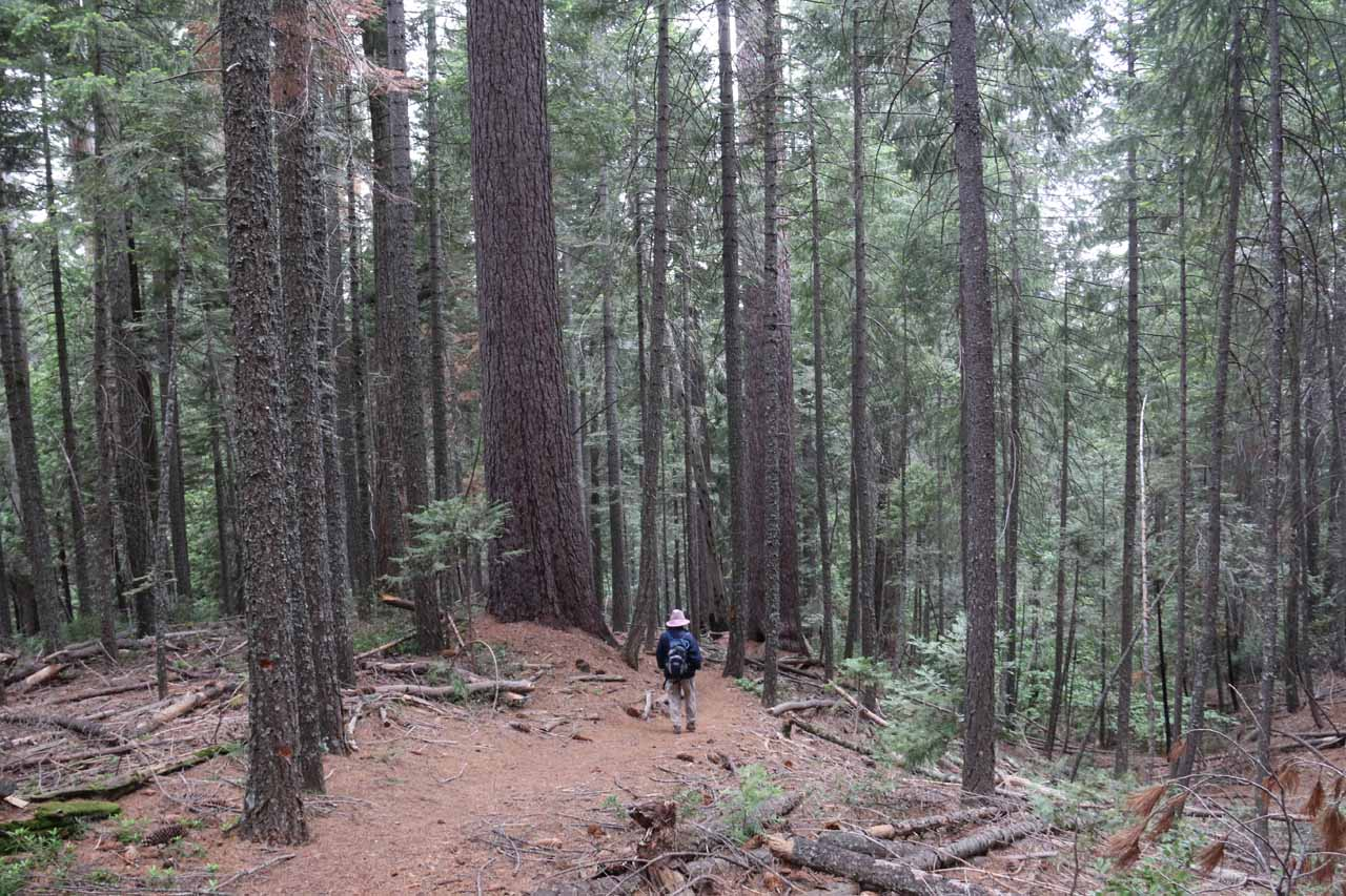 As you can see from this photo, the downhill trail seemed to go through a very dense forest