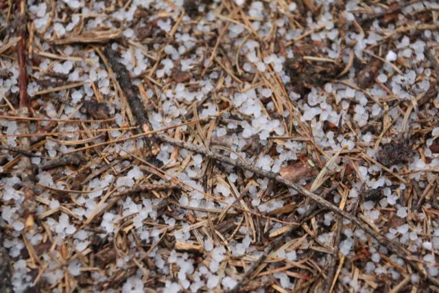 Grouse_Falls_078_05202016 - Looking down at small hail stones during our uphill hike from the Grouse Falls overlook to the trailhead