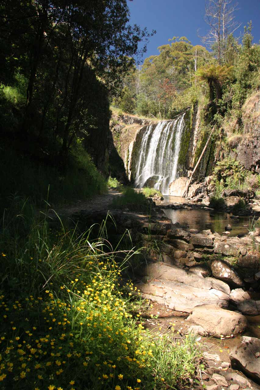 Looking upstream towards the base of Guide Falls from inside its small gorge with some flowers in bloom