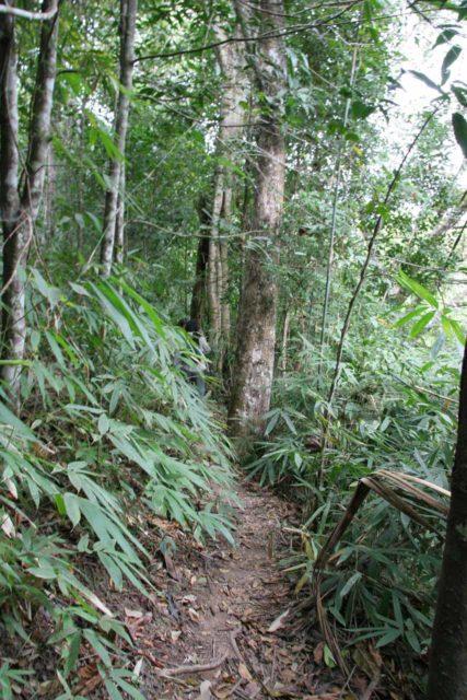 Haew_Sai_003_12272008 - The narrow and overgrown trail leading closer to the Haew Sai Waterfall