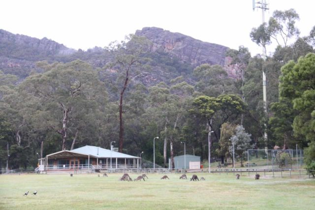 Halls_Gap_156_11152017 - Looking across the Halls Gap Recreational Oval where heaps of kangaroos were grazing in its field