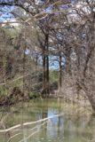 Hamilton_Pool_237_03122016 - When I finally had my fill of the Hamilton Pool Waterfall, I noticed this interesting look at some cypress trees along Hamilton Creek on my way back to the car