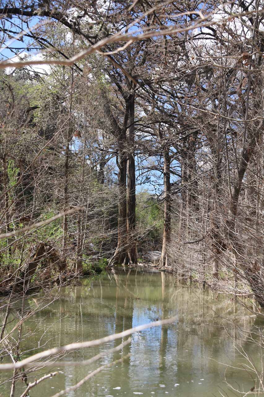 When I finally had my fill of the Hamilton Pool Waterfall, I noticed this interesting look at some cypress trees along Hamilton Creek on my way back to the car