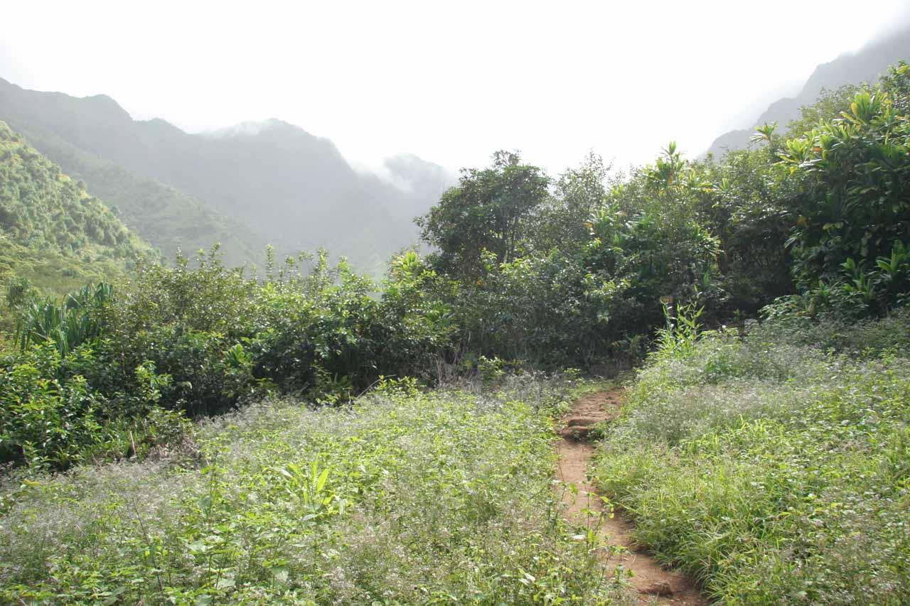Hiking into Hanakapiai Valley