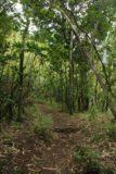 Hanakapiai_Falls_010_12242006 - The trail to Hanakapi'ai Falls