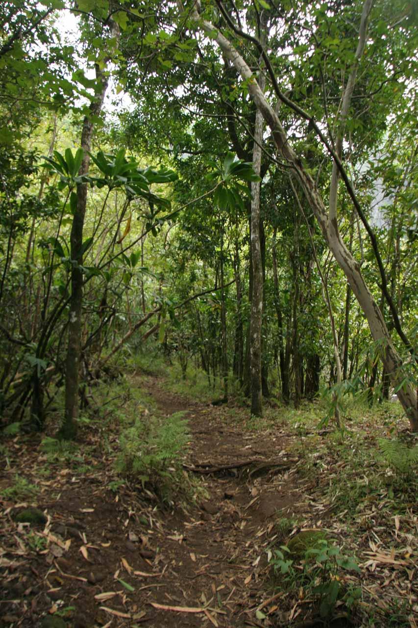The trail to Hanakapi'ai Falls