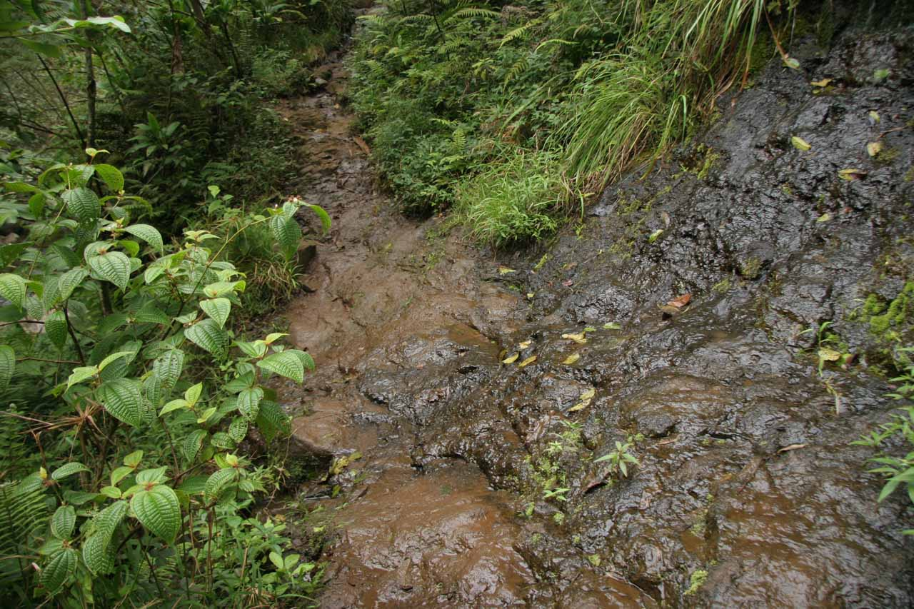 A particularly slippery and partially exposed part of the trail