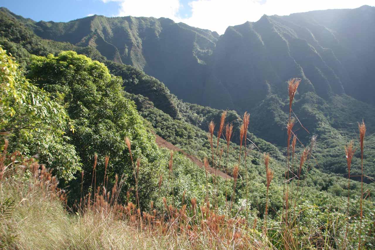 Finally entering the shallow Hanakoa Valley