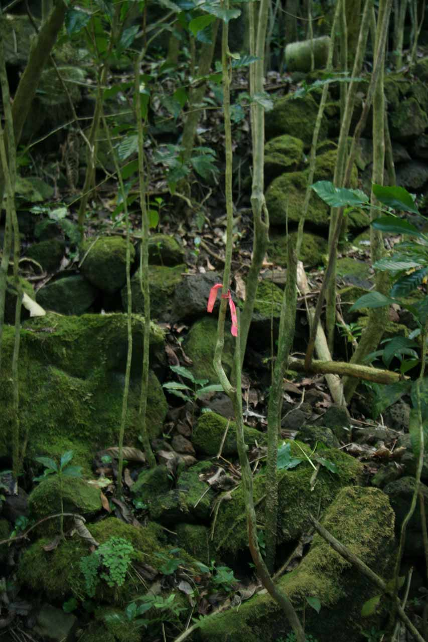 These pink ribbons helped me figure out where I was to go amongst the overgrowth to continue onto the falls