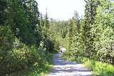 Handolsforsen_009_07122019 - Context of someone walking up ahead on the first 250m stretch of the walk to Handölsforsen