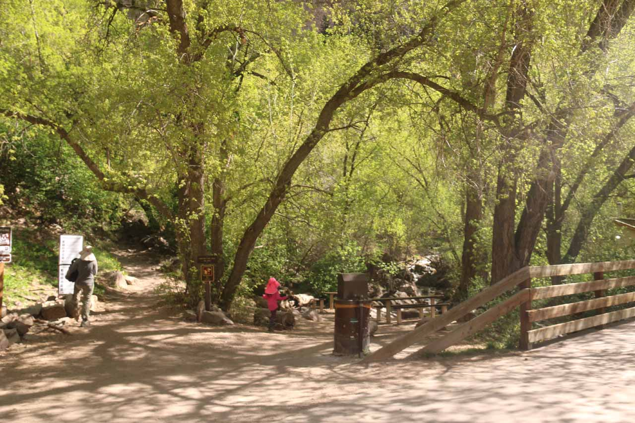 This was the trail junction by the bridge where the Hanging Lake Trail started ascending on the left side of Dead Horse Creek