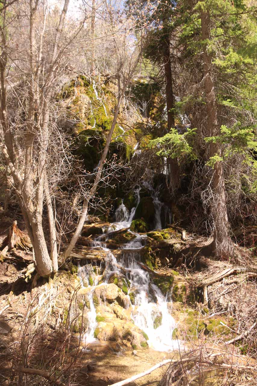 This was one of the more impressive intermediate cascades on Dead Horse Creek