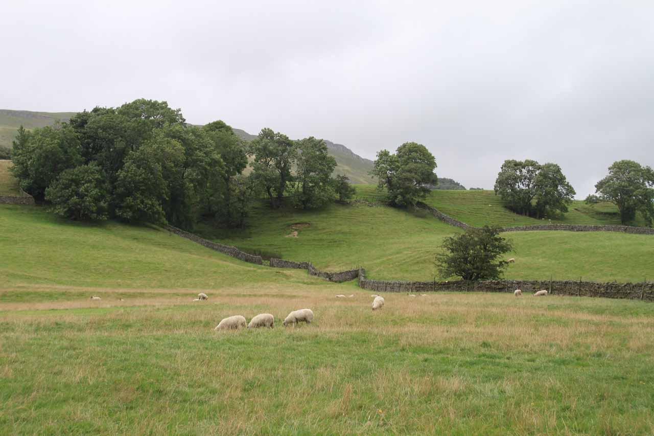 The Simonstone Footpath cut through sheep farming pastures like this