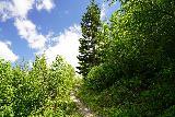 Harmony_Falls_096_06252021 - Still climbing on the Harmony Trail back to the Harmony Viewpoint
