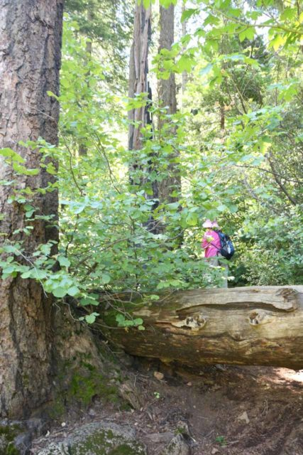Hatchet_Creek_Falls_012_06202016 - Mom getting over this fallen tree obstacle during our rough scramble to Hatchet Creek Falls