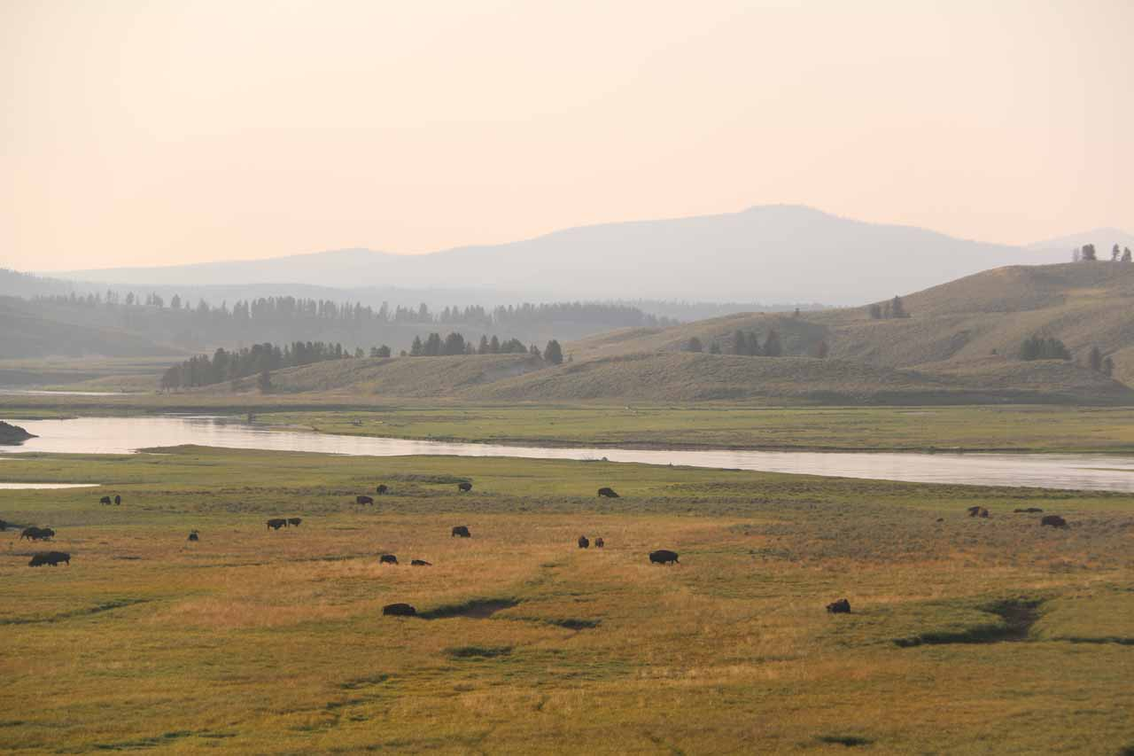 South of the Canyon area was Hayden Valley, which was a nice wide open expanse of land where large herds of bison and elk could typically be seen