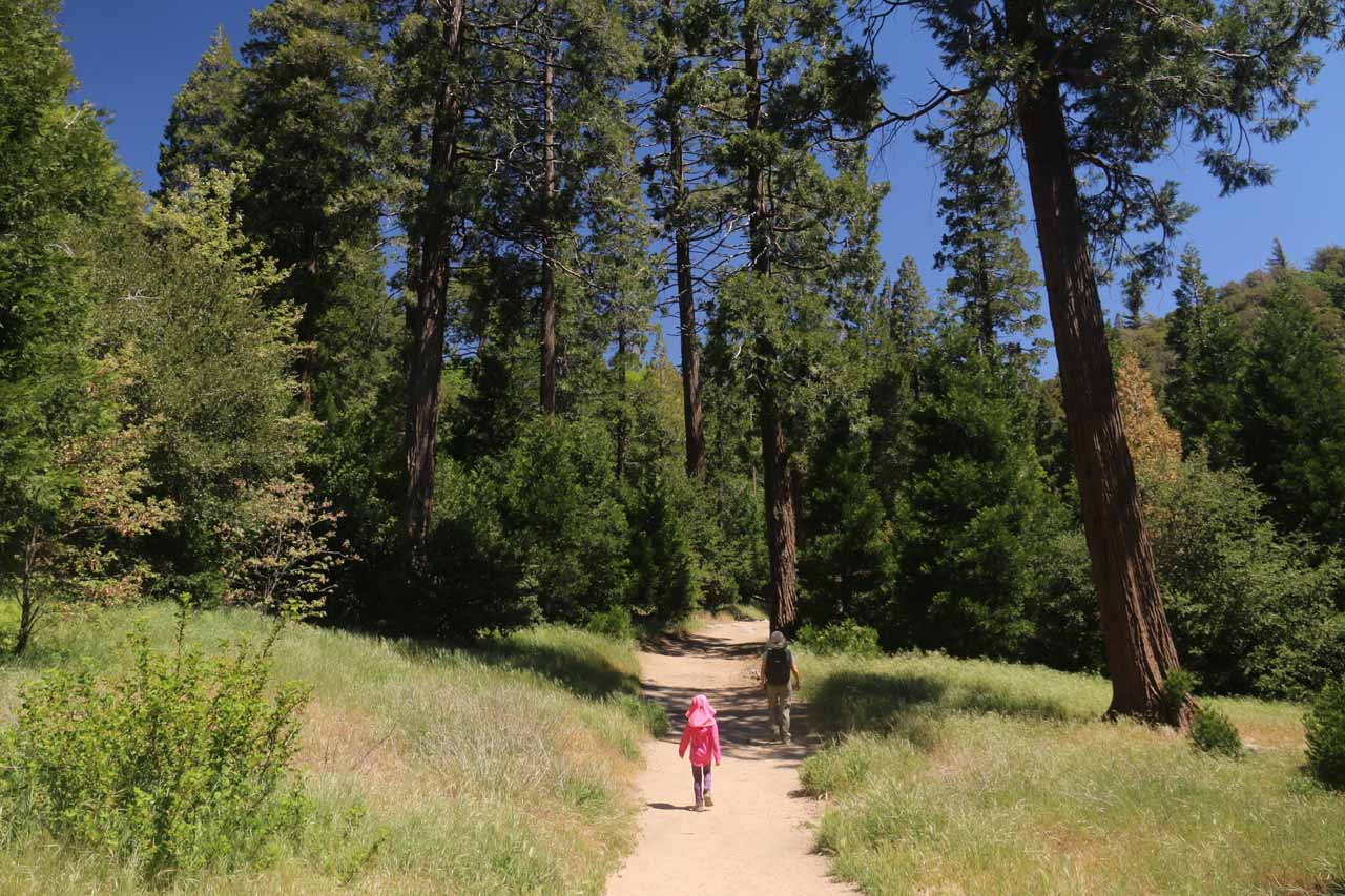Tall pines flanking the trail towering over Julie and Tahia