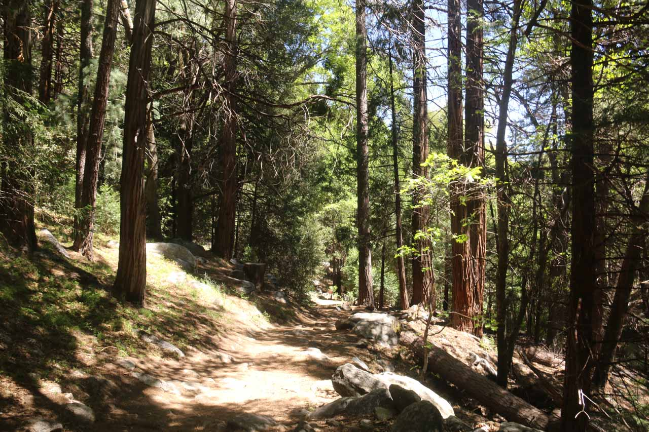 For the most part, the Heart Rock Trail was partially shaded under the cover of the tall trees and its leaves