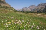 Hidden_Lake_034_08062017 - Another look towards the west end of Logan Pass from the Hidden Lake Boardwalk over a large field of wildflowers