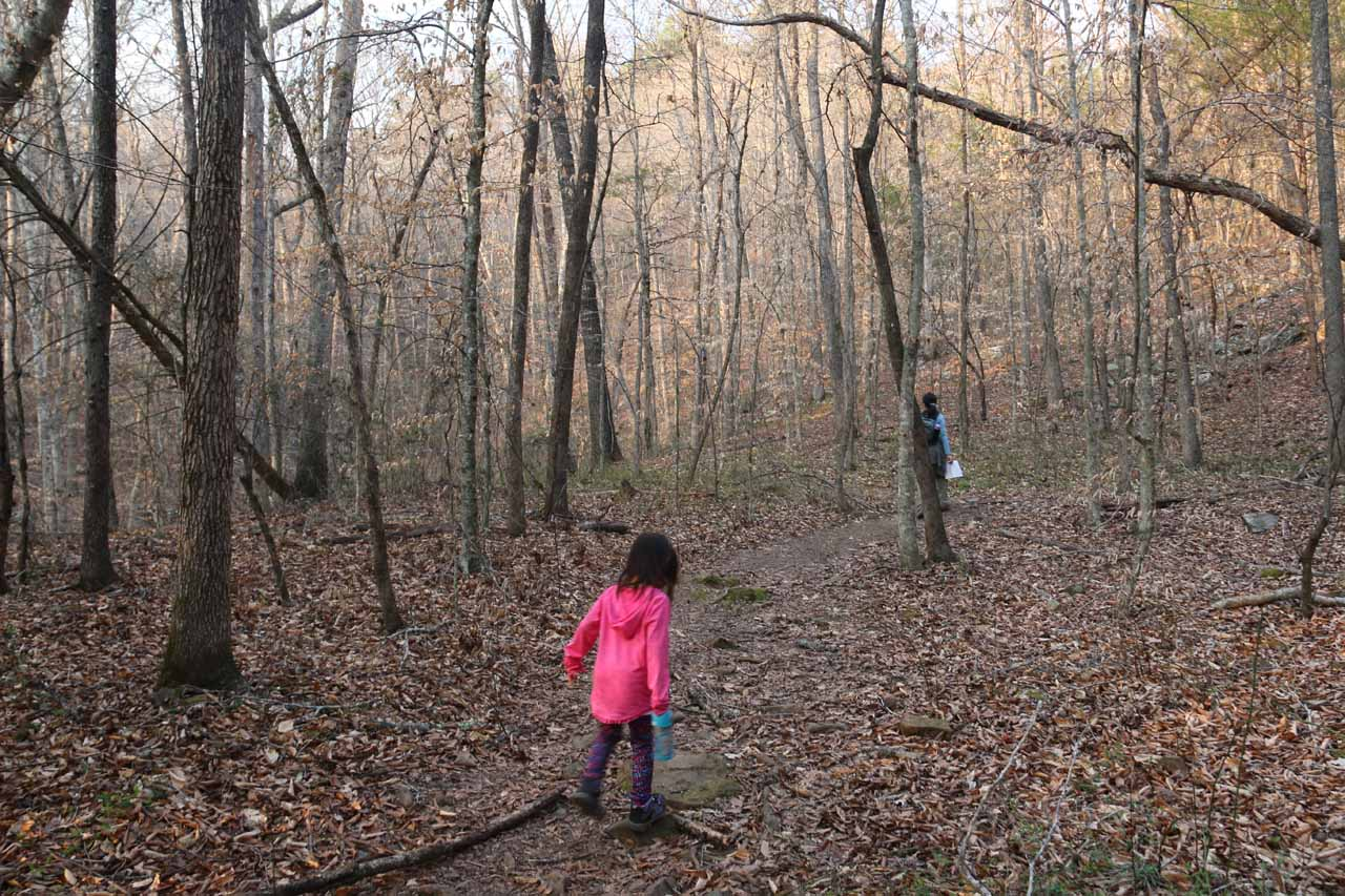 Julie and Tahia passing through a grove of thin trees starting to sprout new leaves for the Spring