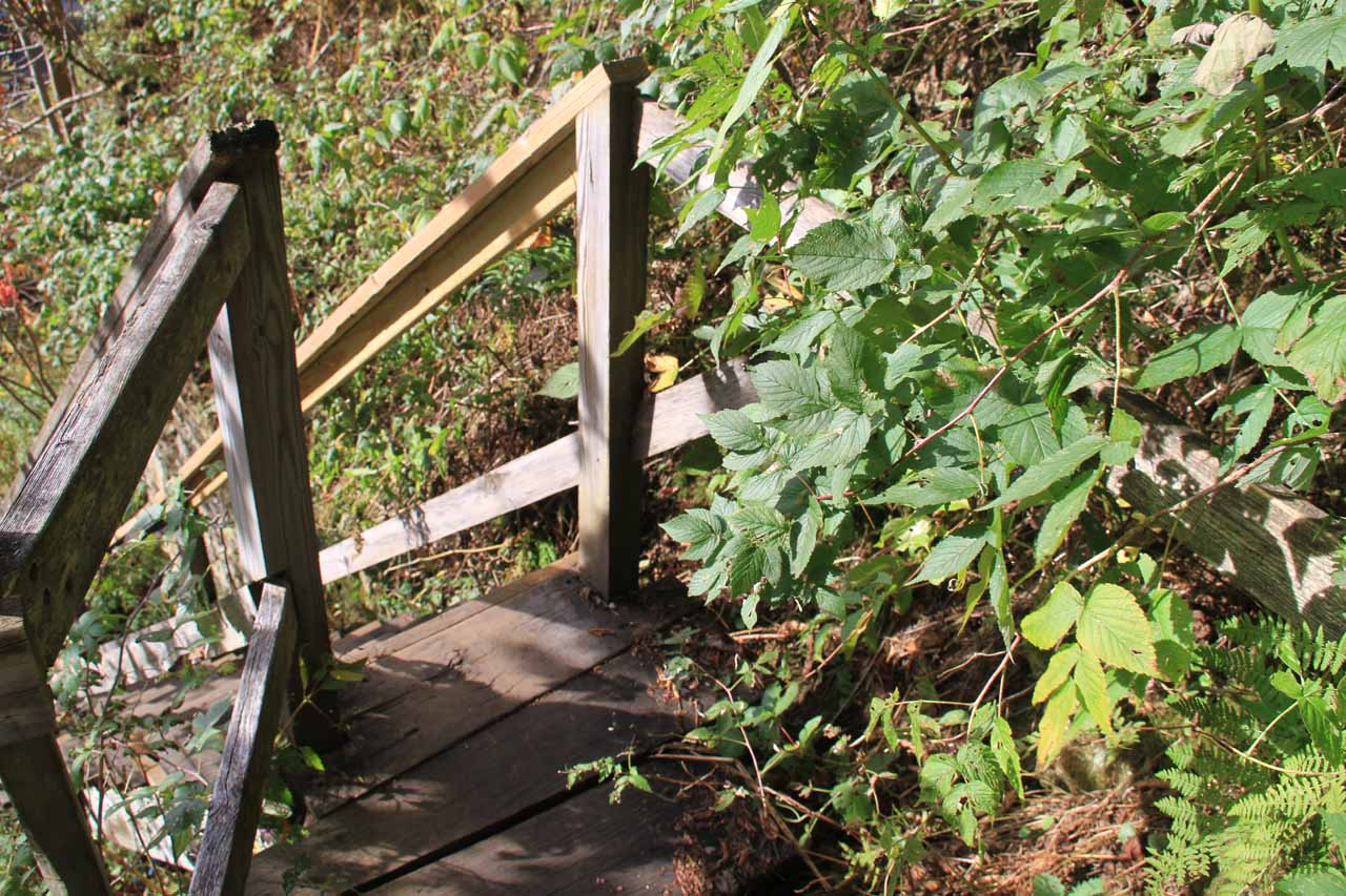 Some poison ivy overgrowth around the narrow wooden steps to the base of High Falls